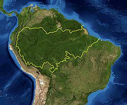 La foresta amazzonica: il grande polmone