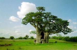 Senegal: una piacevole sorpresa 4