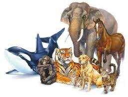 Il mondo animale