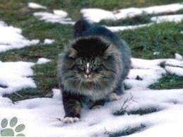 L'influenza benefica di un gatto per amico sul proprietario