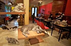 Cat Café, il nuovo business made in Japan