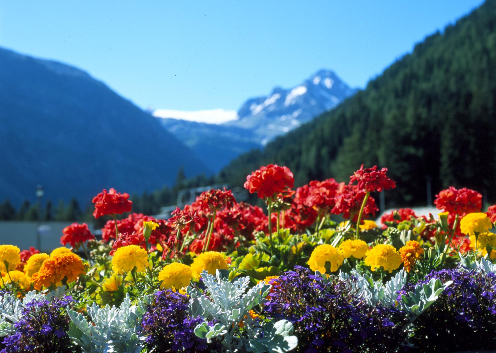 La primavera dei fiori - Fiori da giardino primavera estate ...