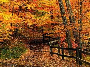 Festa d'autunno a Fontechiari