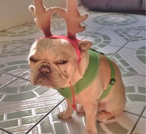 Come rovinare lo spirito natalizio