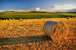 Il ruolo dell'agricoltura nella nostra società