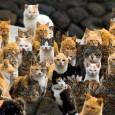 Il 17 febbraio è la festa del gatto in Europa, è stata scelta come data per vari motivi. Il 17 allude alle sette vite dei gatti, il mese è stato […]