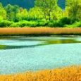 Nella provincia di Rieti, ai confini con l'Umbria,nei colli del Velino, possiamo imbatterci in un minuscolo bacino lacustre, che non si può definire lago vero e proprio, un tempo chiamato […]