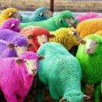 In Irlanda del nord e in Gran Bretagna spesso si svolgono feste della primavera. In alcuni villaggi si ricorre a delle feste spettacolari. Le strade, i negozi, le insegne si […]