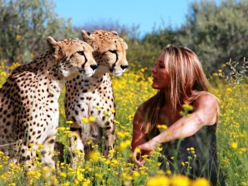 La fattoria dei ghepardi in Namibia