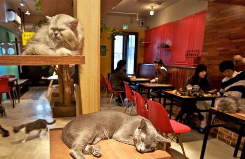 Bar Gatto di Roma